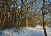 Adk-winterlandschap